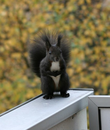 squirrel@balcony