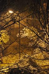 Definitely the end of autumn (2) in Almaty, Kazakhstan, 9 November 2008 (Ivan S. Abrams) Tags: autumn winter arizona snow cold weather nikon asia seasons ivan soviet storms abrams kazakhstan scenes nikondigital kazakh steppes almaty astana smrgsbord tucsonarizona republics 12608 nazarbayev asiacentral onlythebestare ivansabrams trainplanepro nikond300 pimacountyarizona safyan arizonabar arizonaphotographers ivanabrams cochisecountyarizona gettyimagesandtheflickrcollection changeofseasonscentral transcaucasussoviet unionussrformer unionexsoviet ivansafyanabrams arizonalawyers statebarofarizona californialawyers copyrightivansafyanabrams2009allrightsreservedunauthorizeduseprohibitedbylawpropertyofivansafyanabrams unauthorizeduseconstitutestheft thisphotographwasmadebyivansafyanabramswhoretainsallrightstheretoc2009ivansafyanabrams abramsandmcdanielinternationallawandeconomicdiplomacy ivansabramsarizonaattorney ivansabramsbauniversityofpittsburghjduniversityofpittsburghllmuniversityofarizonainternationallawyer