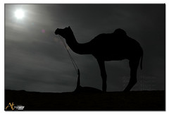 Camel @ Night (Ankur Thatai | A T Images) Tags: moon silhouette night nightshot fullmoon camel pushkar rajasthan cloudynight natureselegantshots atimages photoankurthatai silhouetteatnight