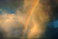 United segregation (ßlϋeωãvε) Tags: morning sky seagulls colors birds animal clouds photoshop skyscape scotland flying rainbow colours cloudy stormy westernisles textured isleoflewis canon50mmf14