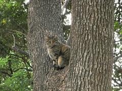 清澄公園のネコ