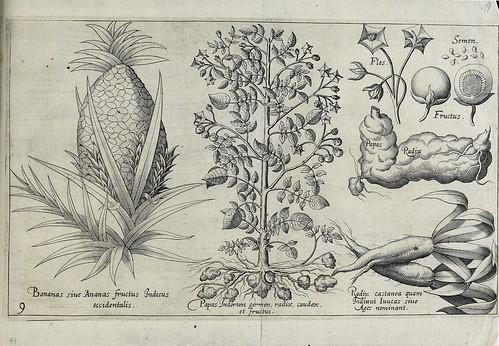 009- Plantas y frutos desconocidos en Europa como la piña y la patata