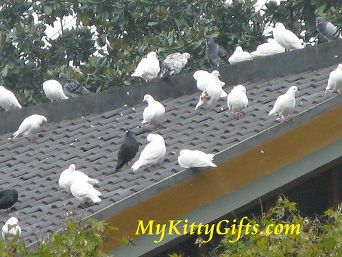 Hello Kitty's View of Pigeons on Roof in Peony Garden, HangZhou