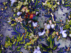 Nature Gone Wild (phil_sidenstricker) Tags: plants abstract art nature bee explore distillery treated newage strangeworld mindseye explored donotcopy diamondstars goldsealofquality proudshopper empyreanart florenceazusa ~maxfudge~ zensationalworld