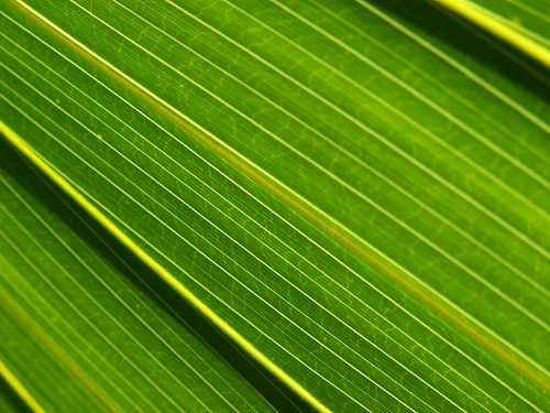linear macro bright green leaves
