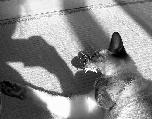sputnik's teeth and shadow
