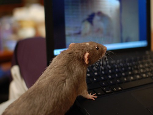 Sheldon watching rat porn