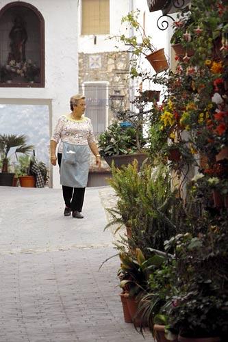 street-plants-jerica