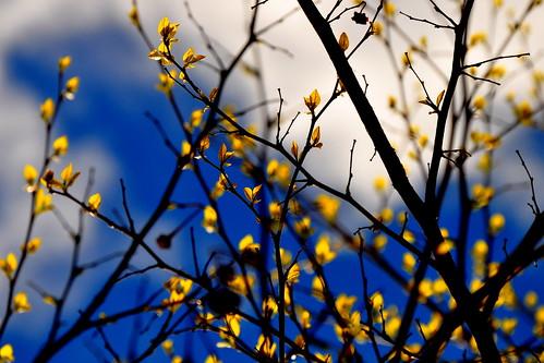 Blue/Black/Yellow/White