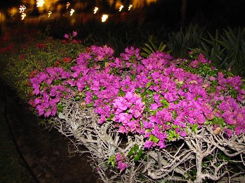 gorgeous purple flowers at night