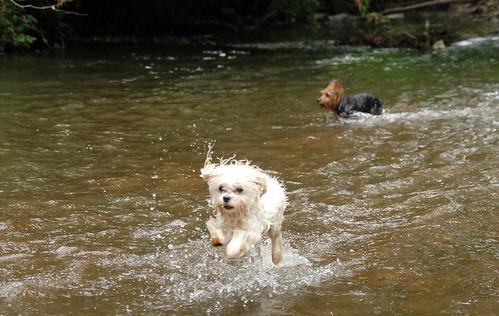 Swim Trip