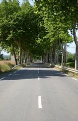 Vanishing Point (Tinina67) Tags: trees france moulin winner midi garonne anan pyrenees haute allee platanen samaran friendlychallenges