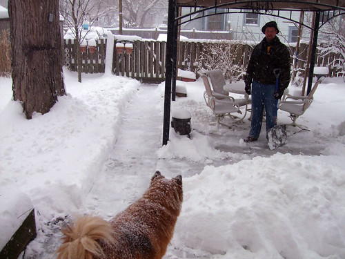 Cordy helping Jeff shovel snow