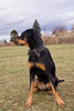 No Photo (invalid_argument) Tags: dog luna perro hund doberman