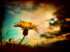 Humility (ToniVC) Tags: lighting light sunset wild sky naturaleza sun sunlight flower macro luz nature fleur yellow closeup clouds canon petals amazing mood alone moody loneliness close cloudy feel f