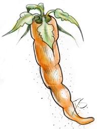 CarrotBlog
