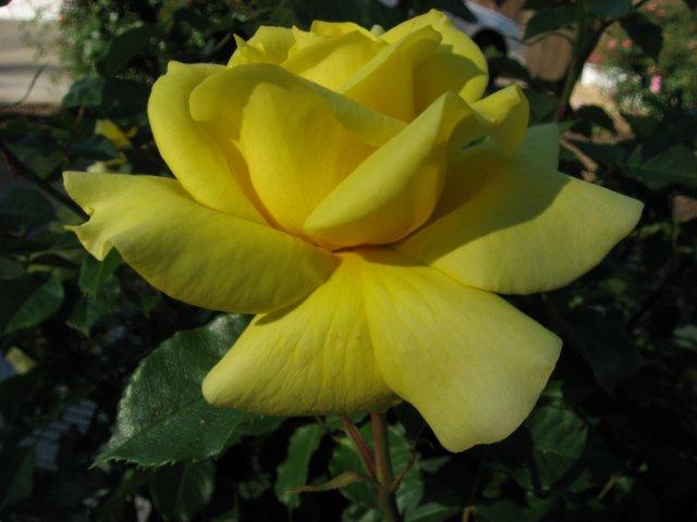 garden4-08 006