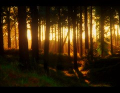 That's My Home. (Confused-Hair) Tags: sunset forest evening bye enchanting abigfave anawesomeshot favoritetimeofday confusedhair thatsmyhome needtoshopforfood ineedtovacatetheseforests