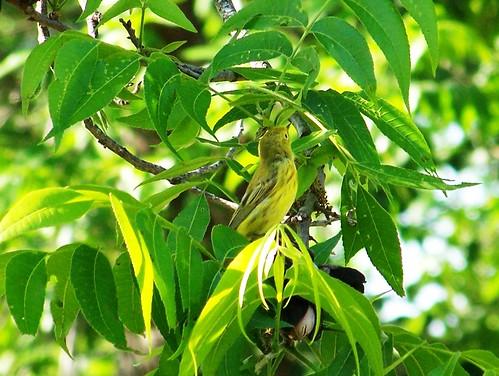 Green Bird 1