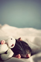 Bug. (Jessica Florence) Tags: bear sleeping love rat flickr teddy famous picture most ang on the withatoy