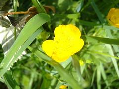 Ireland_0446.jpg (Starman9x) Tags: ireland florafauna