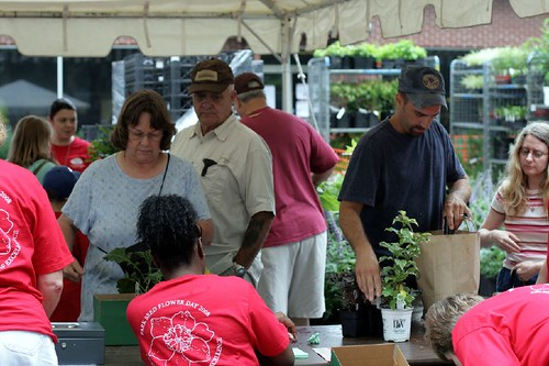 Park Seed Flower Day Plant Sale