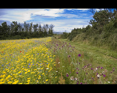 Yellow Green Blue (©Komatoes) Tags: uk flowers field yellow nikon purple kitlens devon exeter ludwell d40 colourartaward artlegacy ludwellvalleypark awesomeblossoms