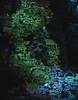 Conception (crescentsi) Tags: woman girl thought ghost alien birth internet interplay computers fade cyborg rebirth ideas renaissance apparition haunt regenerate fissure interchange machinary newart newrenaissance newideas objectsubject