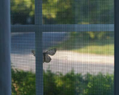 MothOnKitchenWindow1