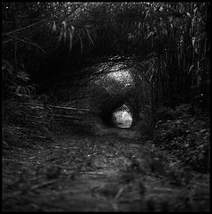 the hole(s?) (el crater) Tags: 6x6 film forest hole bamboo foret chemin bambou trou