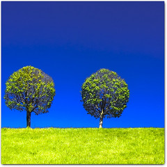 green & blue (Martjusha) Tags: blue trees two sky colour tree verde green geometric nature grass silhouette azul alberi contrast twins couple blauw colours colore drawing blu hill twin natura vert silouette bleu dos sphere cielo saturation blau outline shape albero colori prato gemini due zwei disegno elementary grne forme coppia boh forma sfere gemelli geometria bl contrasto  dva naturesfinest    saturazione cherryontop  mywinners abigfave colorphotoaward ysplix theunforgettablepictures  goldstaraward  damniwishidtakenthat