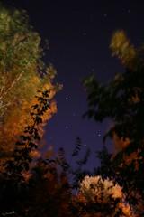 Primera impresion de la Osa Mayor (darkside_1) Tags: madrid espaa cielo estrellas anawesomeshot talamancadeljarama damniwishidtakenthat sergiozurinaga bydarkside paisajeceleste