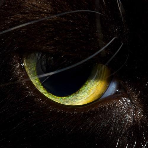 Loulas Eye