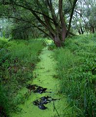 Green Water (binaryCoco) Tags: green nature water rain back wasser natur hannover brook grün regen laatzen colourartaward teufelskuhle