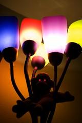 Sweet Dreams - 70/365 (EideMontana) Tags: bongo almostsooc oneobject365daysproject icouldhaveleftitasisbutihadtomaketheevileyesijusthadto