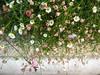 fiori di terrazza