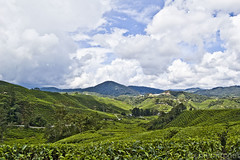 Sungei Palas BOH Tea Plantation (chee.hong) Tags: cameronhighlands teaplantation boh sungeipalas