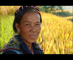 Soon we will cut the rice... (NaPix -- (Time out)) Tags: portrait woman yellow asia southeastasia rice paddy harvest vietnam explore ritratto ricepaddy sapa hmong riso blueribbonwinner hbw raccolto visiongroup betterthangood napix riceprices riceshortages worldricesituation soonwewillcuttherice