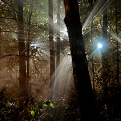 Natural Night Light Beams (ViaMoi) Tags: viamoi photography canon longexposure long exposure light beam forest fog mist rain misty lensflare flare ottawa canada supershot goldstaraward excapture blueribbonwinner onephotoweeklycontest diamondclassphotographer damniwishidtakenthat viamoiquickshow1 betterthangood mywinners pfmagic pfbeams primevalforestgroups