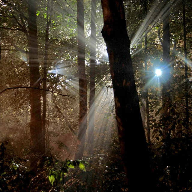 Beautiful flare photography