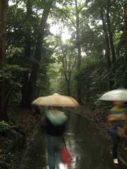 Path to Meiji Shrine in the rain
