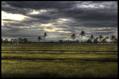 let's harvest some love (acidsulfurik) Tags: morning ramadhan hdr aidilfitri fasting 730am photomatix pseudohdr singleraw the4elements sabakbernam lastdayoframadhan