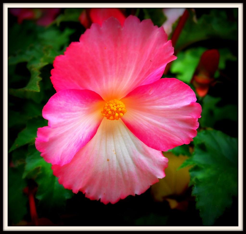 Last Flower of the Season