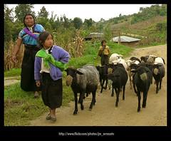 camino362 (-Karonte-) Tags: nikoncoolpix8700 coolpix8700 chenalho indigenaschiapas indigenouschildren niosindigenas altoschiapas josemanuelarrazate