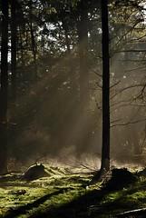 Beams (sillie_R) Tags: light tree fall landscape geotagged veluwe hogeveluwe geo:lat=5210251278 geo:lon=579103306