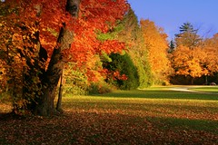 Have a Wonderful Sunday  ! (Ming chai) Tags: ontario canada bravo autumncolors colorsoffall colorsofautumn rebelxti fallintoronto autumn08 colorsofnatures
