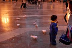 (S)perduto (la_Wera) Tags: plaza city espaa bird valencia square reflex spain nikon child pigeon ciudad nios uccelli piazza valenza nio piccione spagna citt uccello bambino d60 childre comunidadvalenciana plazadelavirgen colomba birda