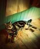 happy furry friday! (hanna.bi) Tags: london cat happy furry tabby greenwich friday hannabi thelittledoglaughed thecatwhoturnedonandoff