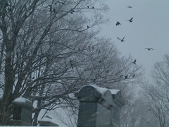 Murder of Crows (marklessard) Tags: snow grave stones maine murder crows