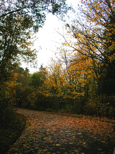 2-Discovery Park Old Road